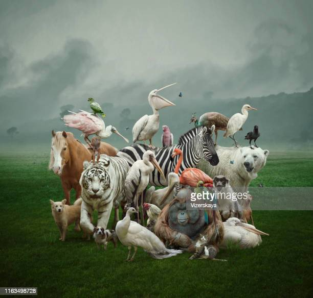 big family - zebra stock pictures, royalty-free photos & images