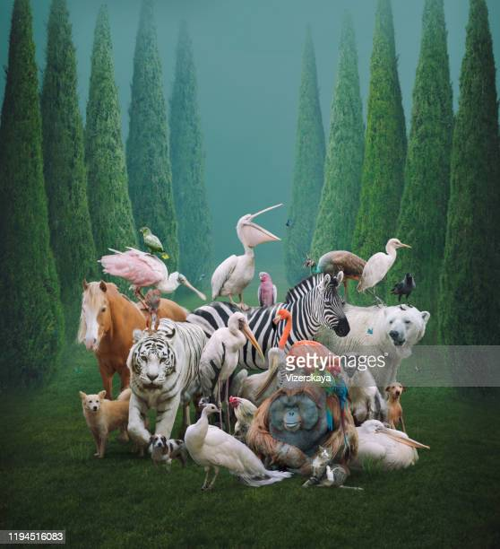 big family - animals in the wild stock pictures, royalty-free photos & images