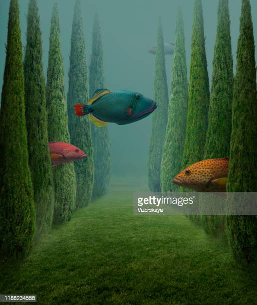 gros poissons - imagination photos et images de collection