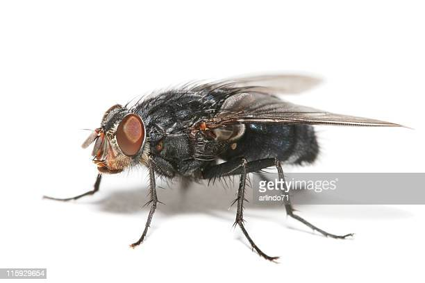big fly 03 - housefly stock pictures, royalty-free photos & images