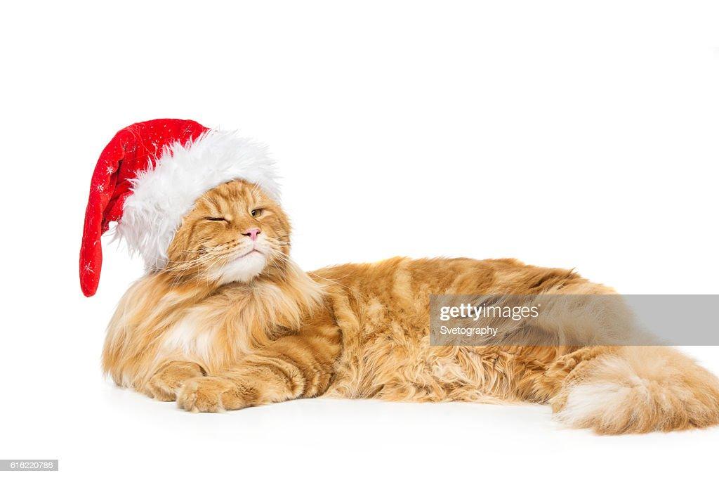 Big ginger cat in christmas hat : Stock-Foto