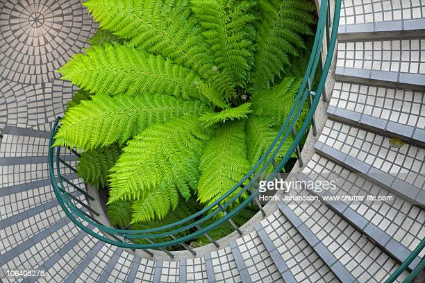 Big green fern in the middle of a curved stairwell