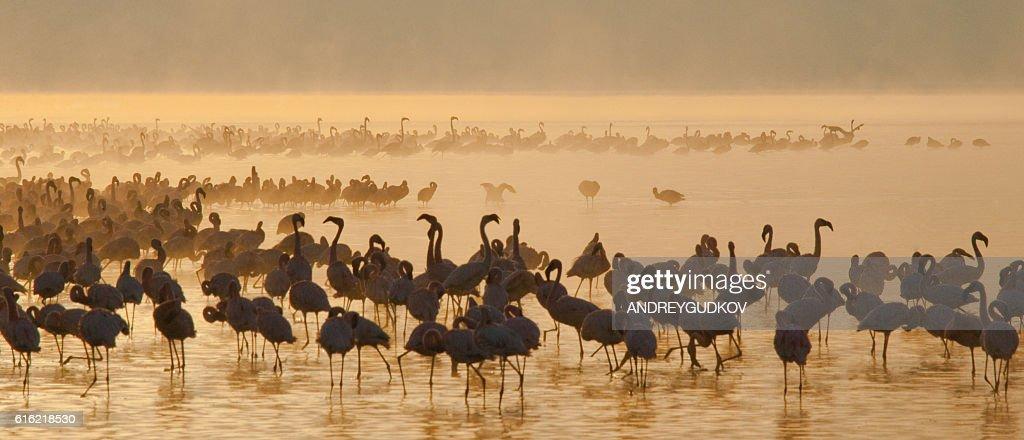 Big group flamingos on the lake. Kenya. : Foto stock