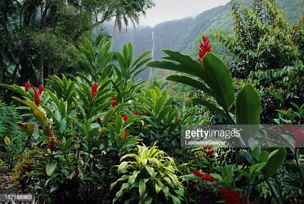 La Isla Mayor de Hawai