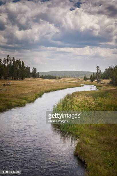 big meadows in yellowstone - big meadows stock pictures, royalty-free photos & images