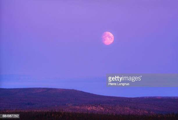 big moon over the boreal forest of the yukon territory at dusk - canada - pink moon stock pictures, royalty-free photos & images