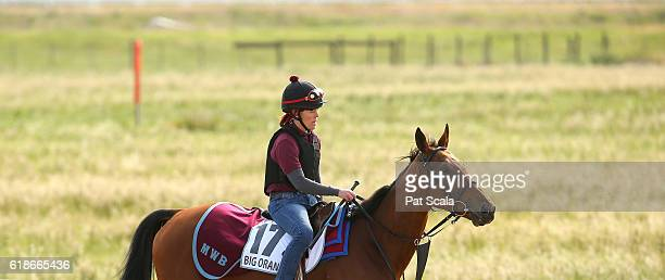 Big Orange during trackwork at Werribee Racecourse on October 28 2016 in Werribee Australia