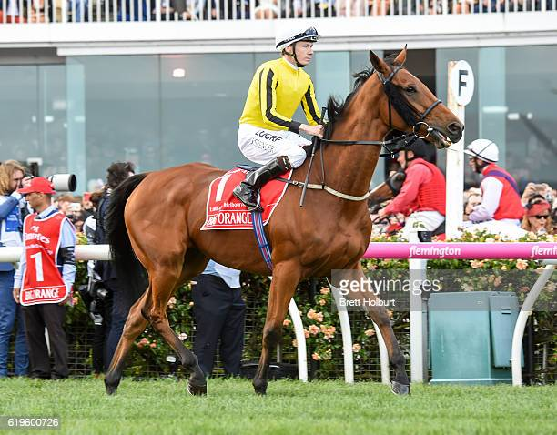Big Orange ridden by James Spencer before race Emirates Melbourne Cup at Flemington Racecourse on November 01 2016 in Flemington Australia