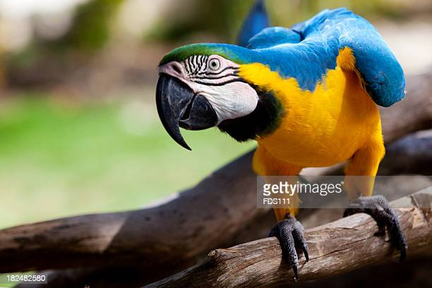 big parrot - macaw stock pictures, royalty-free photos & images