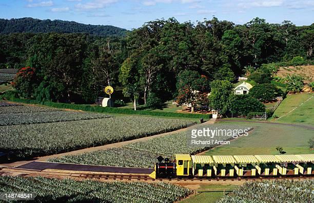 Big Pineapple plantation.