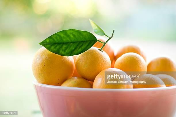 Big pink bowl of valencia oranges