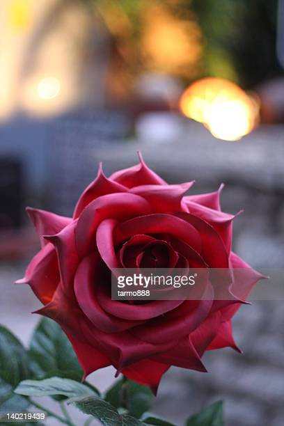 big red blossom - harjumaa stock pictures, royalty-free photos & images