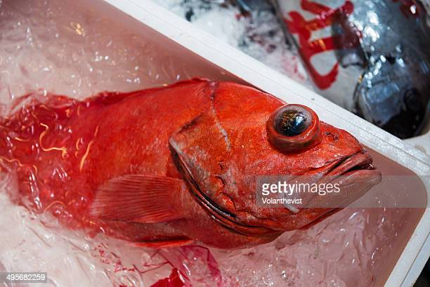 Big red fish on sale in a Japanese market