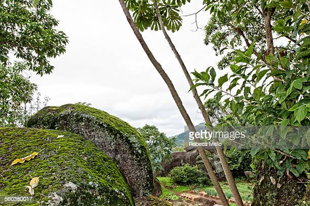 big rocks in mountains - queensland umbrella tree stock pictures, royalty-free photos & images