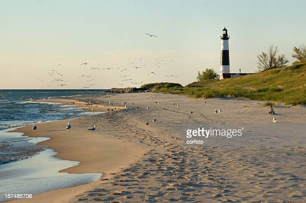 big sable point lighthouse with gulls - state park stock pictures, royalty-free photos & images