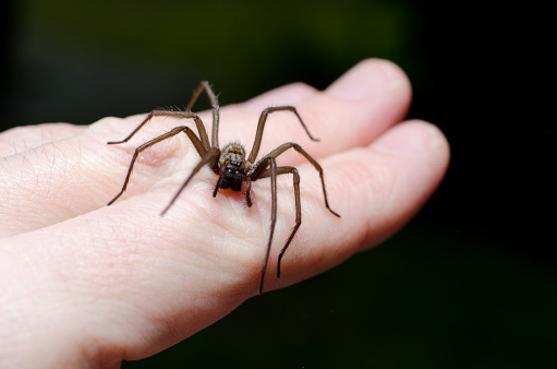 Big scary spider on hand 927336828