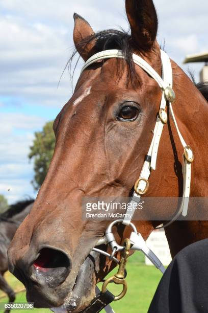 Big Spender after winning Echuca Newsagency BM58 Handicap at Echuca Racecourse on February 13 2017 in Echuca Australia
