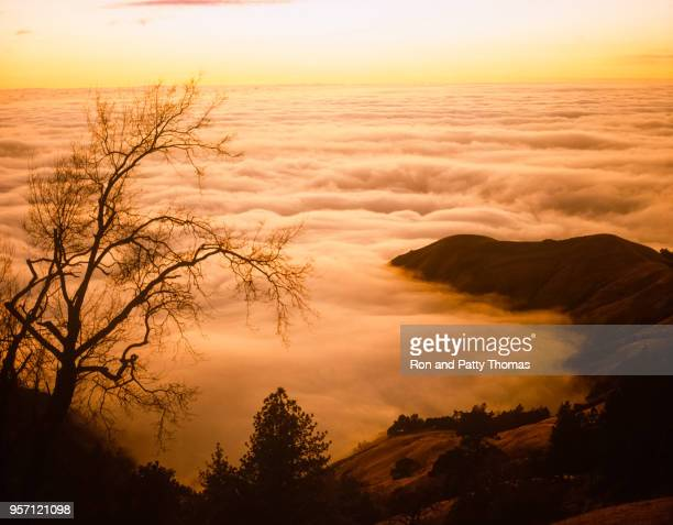 Big Sur's fog covers the surface of the Pacific Ocean at sunset