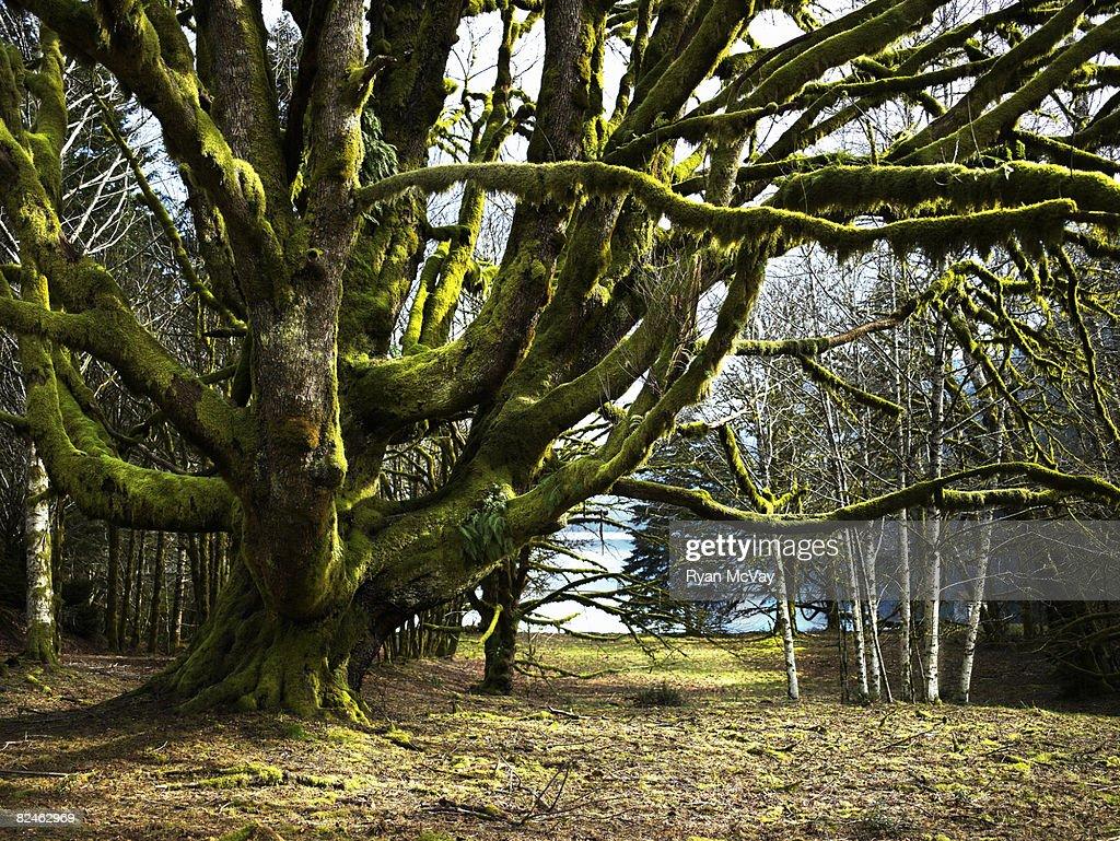 Gran árbol en el paisaje : Foto de stock