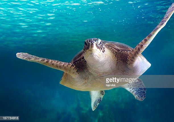 Big turtle floating in the sea