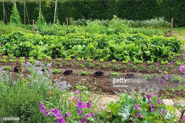 Big vegetable garden