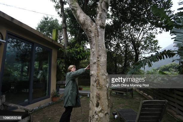 Big Wave Bay resident Ally Whittle with her Aquilaria Sinensis agarwood tree 21JAN16 SCMP/Jonathan Wong