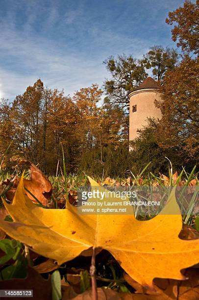 big yellow dead leave in foreground - brancaleoni imagens e fotografias de stock
