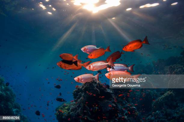Big-eye fish with shafts of sunlight.