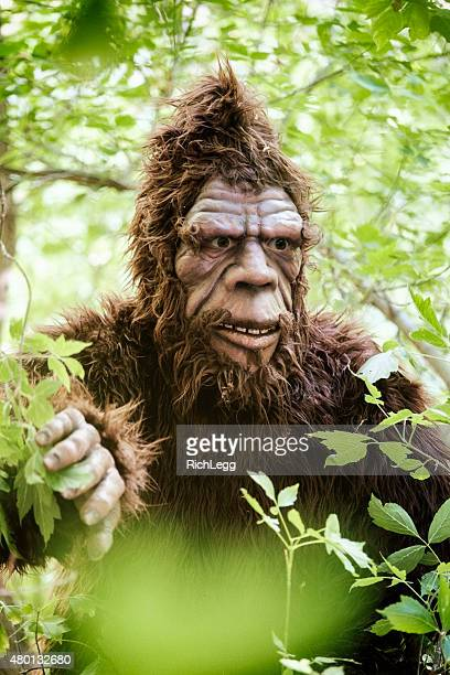 bigfoot in foliage - hairy bush stock pictures, royalty-free photos & images