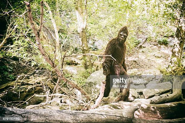 Bigfoot in WIld
