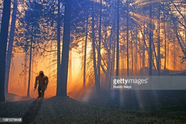 bigfoot or sasquatch in a mysterious forest - bigfoot fotografías e imágenes de stock