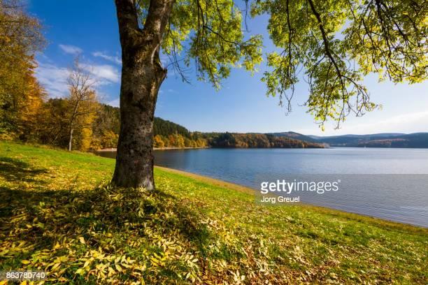 biggesee in autumn - stausee stock-fotos und bilder