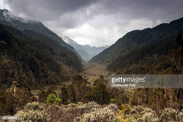 Bigo Bog, Rwenzori Mountains, Uganda