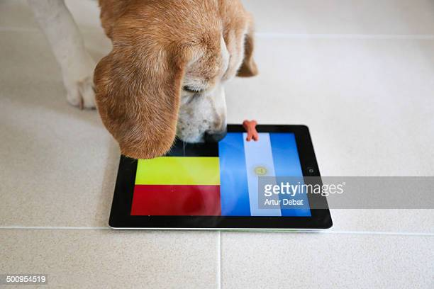 Bigui the Beagle just made his prediction about the Brazil 2014 FIFA World Cup match between Belgium and Argentina Belgium wins