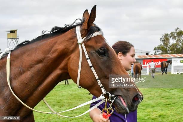 Bijou Belle after winning the Danny O'Brien MP BM58 Handicap at Stony Creek Racecourse on March 11 2018 in Stony Creek Australia