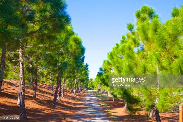 Bike path through pine trees in Cape Coral