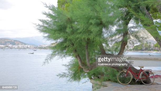 bike resting against a tree in Puerto Pollensa Spain
