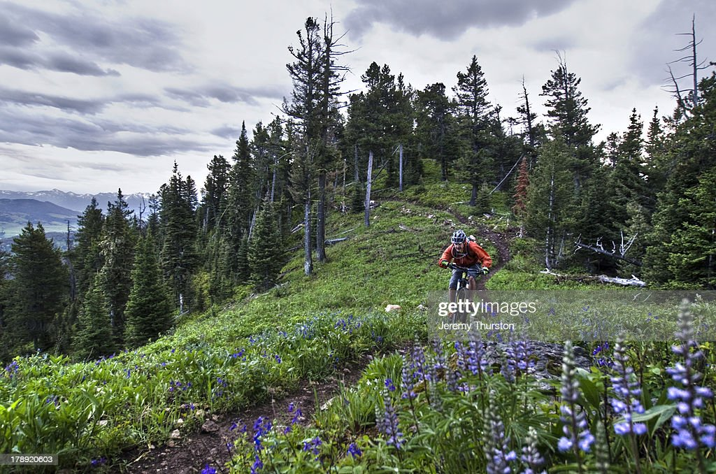 bike riding through wildflowers : Stock-Foto