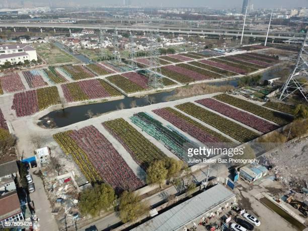 Bike share garbage in Shanghai China
