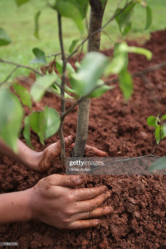 Bike To Work Group Members Conduct Tree Planting Program : News Photo