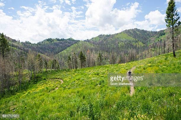 Biker mountain biking, Sun Valley, Idaho.