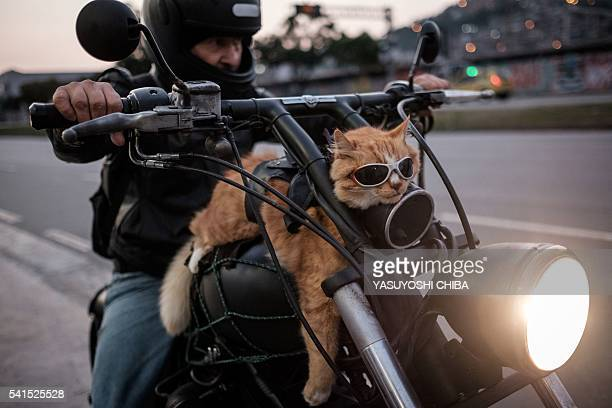 TOPSHOT A biker shows his 12yearold cat 'Chiquinho' which always rides with him on his motorbike in Rio de Janeiro Brazil on June 19 2016 / AFP /...