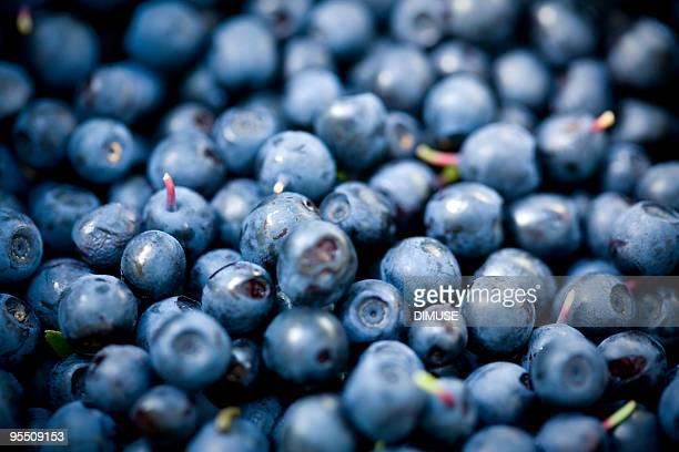 Bilberry dispersão