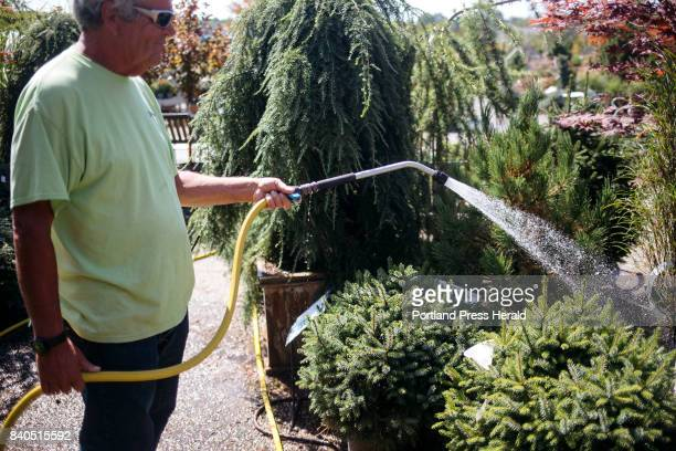 Bill Chase waters some of the plants at Estabrook's Garden Center and Nursery Chase spends a couple of hours watering all of the plants in the...