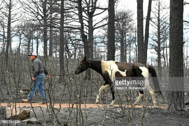 Bill 'Coach' Price leads Tobie one of three rescued horses out of the burn area of the Spring Creek Fire in Piney Ridge Ranch on July 4 2018 in La...