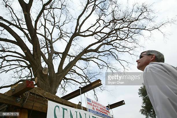 Bill Rattazzi a regional president of John Laing Homes looks up at the 100–foot tall oak tree nicknamed Old Glory after it was moved to a park along...