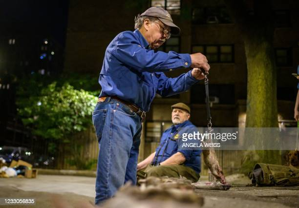 Bill Reyna of 'The Ryder's Alley Trencher-fed Society ' weighs a dead rat in a neighborhood in lower Manhattan on May 14, 2021 in New York City. -...