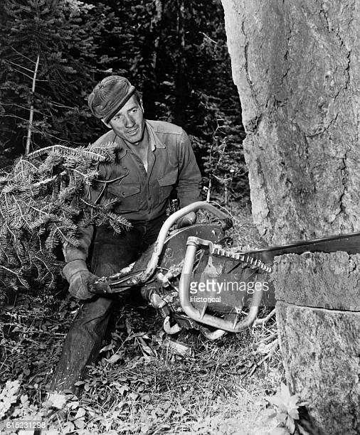 Bill Stoddard Jr holds on to the head end of a power saw felling a Douglas fir Idaho | Location Targhee National Forest Idaho USA