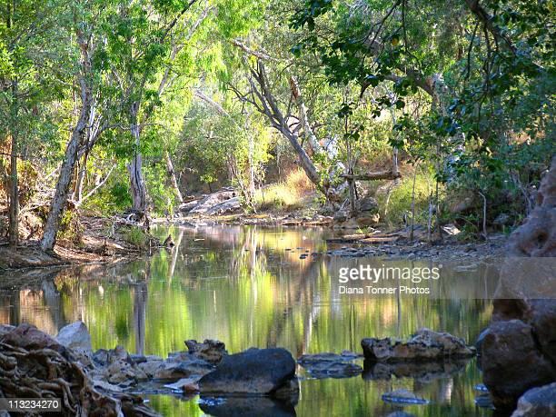 billabong in kimberleys - billabong water stock photos and pictures