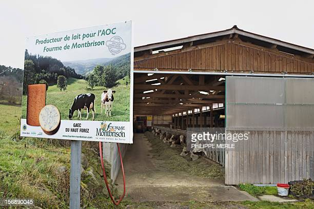 A billboard placed in front of a stable on November 15 2012 at EssertinesenChatelneuf near Montbrison central France claims that the milk from...